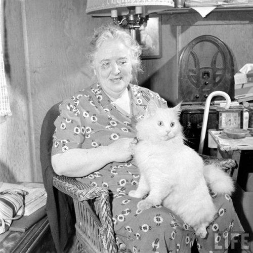 老照片:1947年的导盲猫