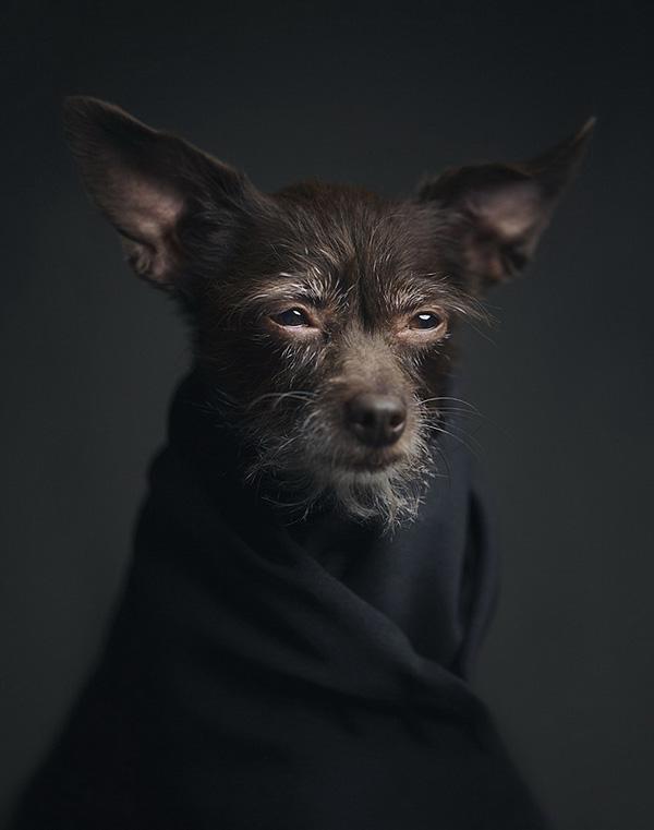 Vincent Lagrange动物摄影作品