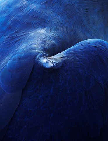 Thomas Lohr摄影作品:鸟