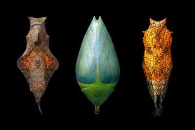 Tim Flach动物摄影新作:More Than Human