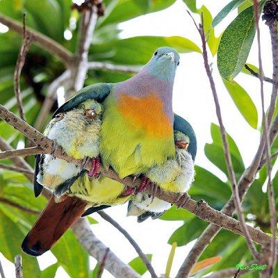 图集:好父母典范的动物们