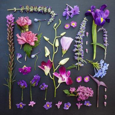 Emily Blincoe摄影作品:花园
