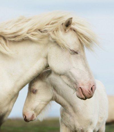 Gigja Einarsdottir摄影作品:马