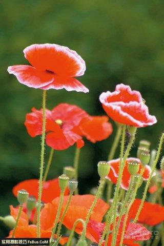 简单4招花卉摄影用光摄影技巧