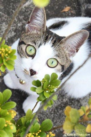 4招教你拍出宠物们的自然表情