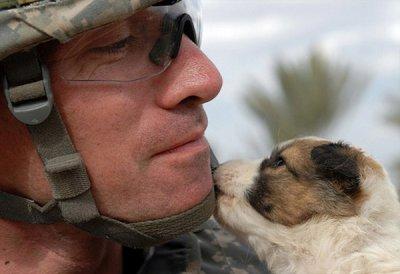 士兵们的猫和狗