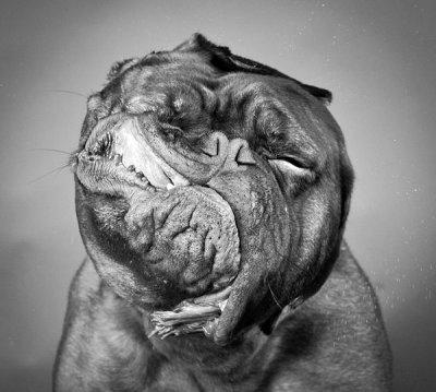 Carli Davidson的宠物摄影作品:摇动