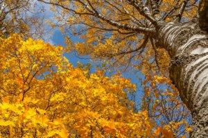 5招教你拍出美丽的红叶 风景摄影教程
