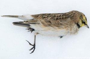 冬日寝技 如何让你的小鸟无惧严寒