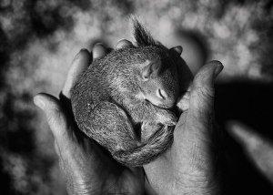 Tytia Habing 黑白摄影作品