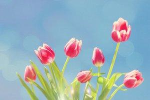 早安心语:容易衰老的不是容颜,而是不敢进取的心