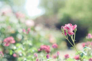 晚安心语:生活简单就迷人,人心简单就幸福