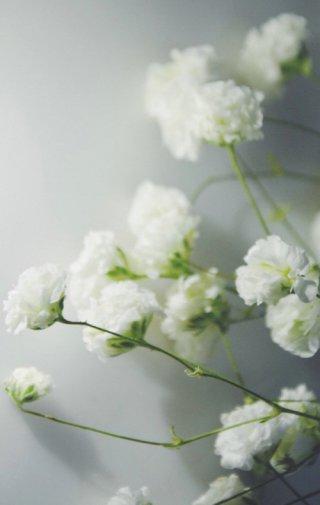 优雅的思念_小清新花朵背景图片