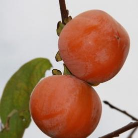 经期可以吃柿子吗 生理期最好别碰寒性水果