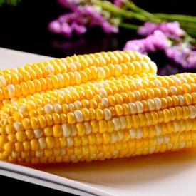 玉米糖尿病人能吃吗 降血糖推荐老玉米