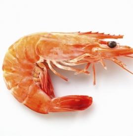 产妇可以吃虾吗 适量吃虾好处多多