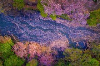 Danilo Dungo摄影作品:日本