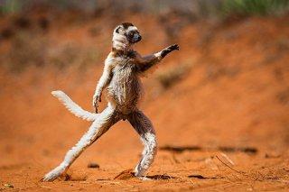 2015年趣味动物摄影奖获奖作品