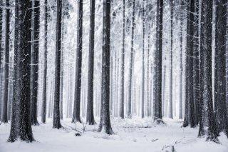 Heiko Gerlicher摄影作品:森林