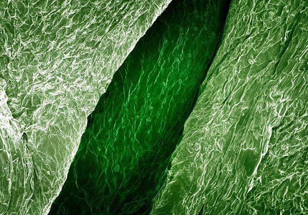Alpert_terra_cibus_no_3_celery_leaf
