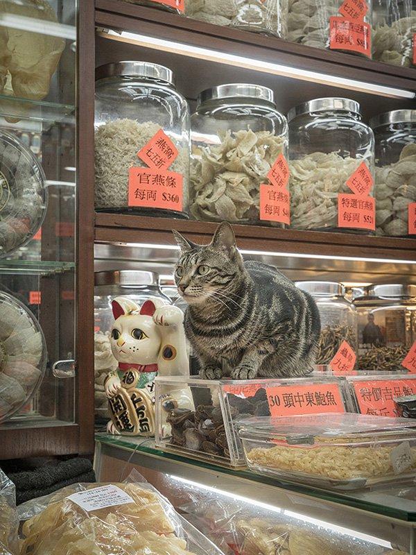 Marcel Heijnen摄影作品:香港的「铺头猫」