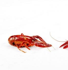 吃小龙虾要注意什么 吃虾季节的7个注意事项