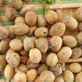 巴豆可以减肥吗 致泻中药巴豆可别盲目用来减肥