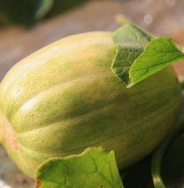 香瓜可以空腹吃吗 夏季香瓜尽量不要空腹食用