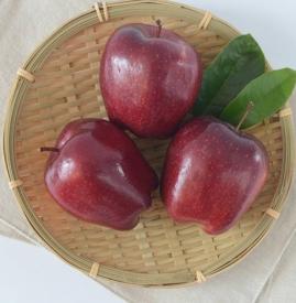 蛇果是转基因的吗 蛇果可并非转基因苹果