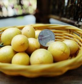 黄皮果孕妇可以吃吗 孕妇适量吃黄皮果好处多多
