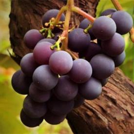 女人吃葡萄有什么好处 吃葡萄可不仅仅只能减肥哟