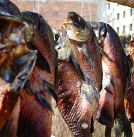 腊鱼什么季节做 为什么腌制品宜在冬季做