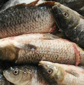 腊鱼用什么鱼好 腌鱼使用较广泛的是草鱼