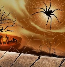 万圣节蜘蛛妆容 妩媚毒性蜘蛛妆