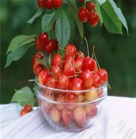 能祛斑的水果