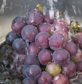 葡萄没洗就吃了 葡萄没洗能吃吗