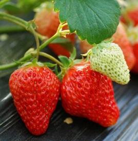 草莓宝宝几个月可以吃 宝宝多大可以吃草莓