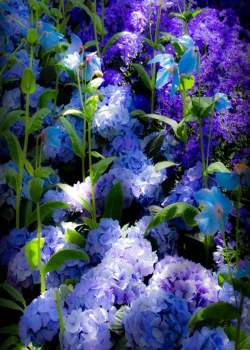 清新护眼花卉图片手机壁纸
